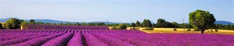 wann blüht der lavendel in frankreich frankreich urlaub g 252 nstig buchen der