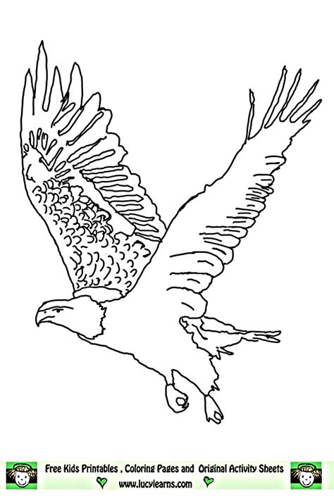 eagle coloring pages bird coloring pages animals 89 coloring page for birds of prey coloring pages