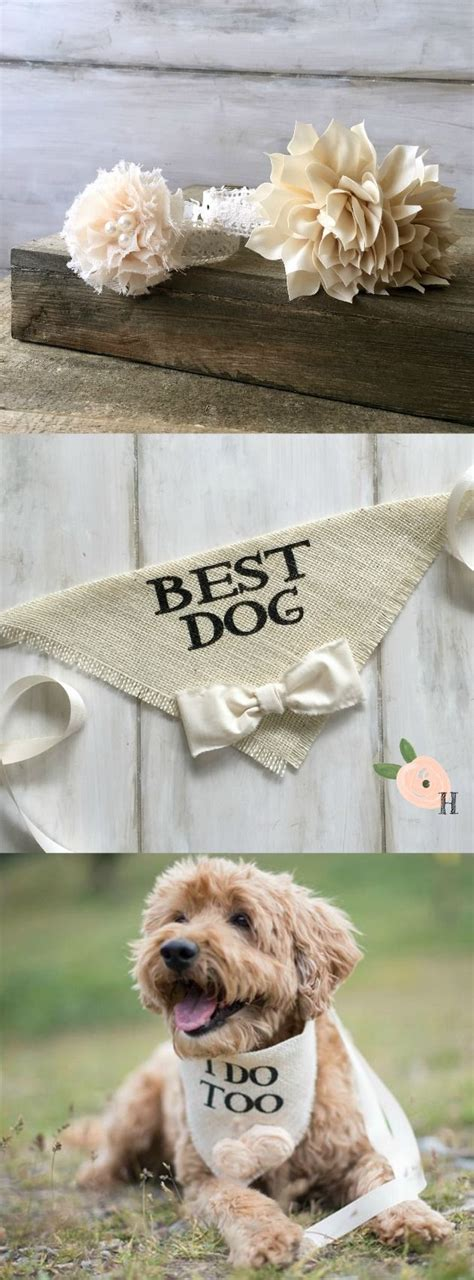 Wedding For Your Beloved Pet by 25 Best Ideas About Haircuts On