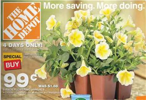 home depot garden flowers pk  ea southern savers