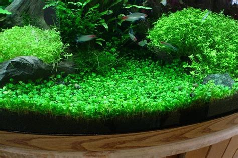 java moss aquascape 1000 images about nicks vivarium on pinterest bonsai