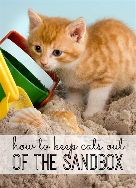 how to keep the cats out of your sandbox best sandbox