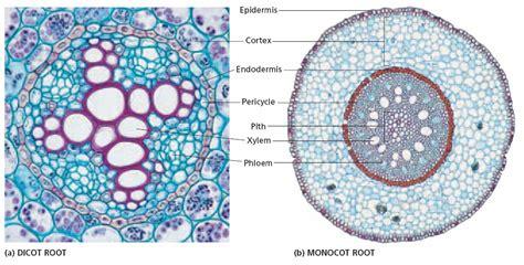 rpp kurikulum  struktur  fungsi jaringan tumbuhan