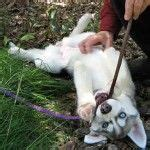 hyperactive puppy biting best 25 puppy biting ideas on stop puppy biting a puppy and