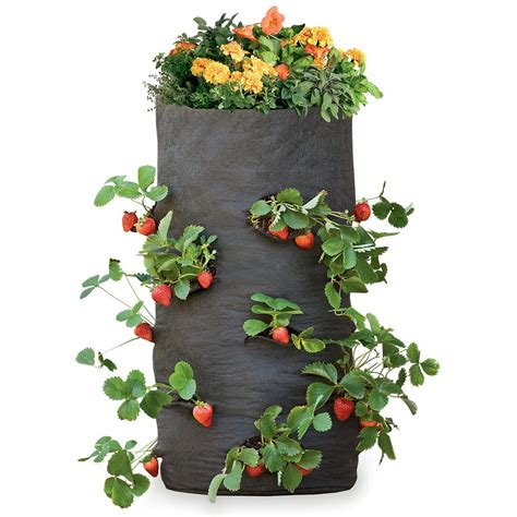 grow bags tomatoes peppers herbs and potatoes the green head