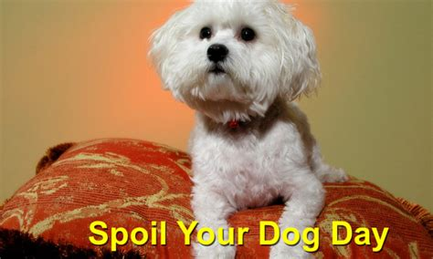 national spoil your day spoil your day local value veterinary