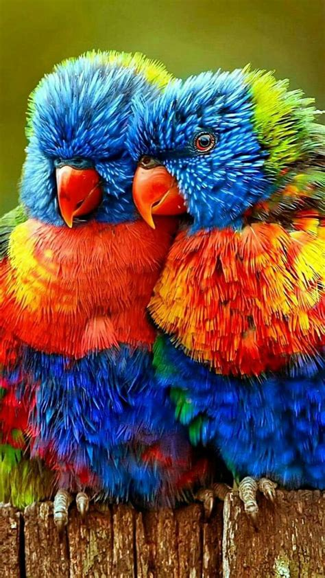 colorful birds best 25 colorful birds ideas on pretty birds