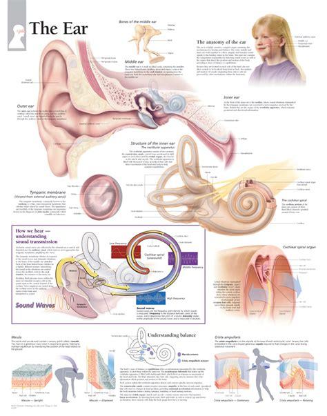 ear chart the ear scientific publishing