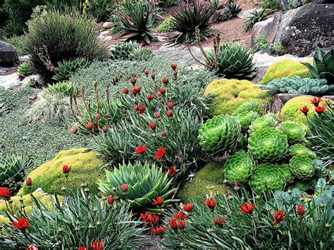 1000 images about alpine gardens on