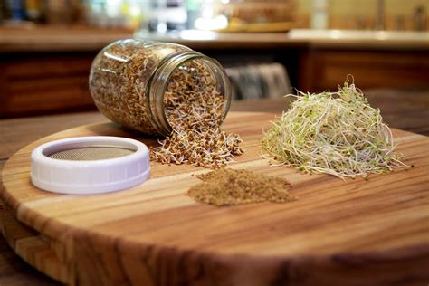 sprouting activate  seed mountain feed farm supply