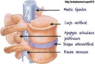 colonne vert 233 brale anatomie et pr 233 paration physique