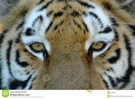 imagenes ojos de tigre fotos ojos de tigre blackhairstylecuts com