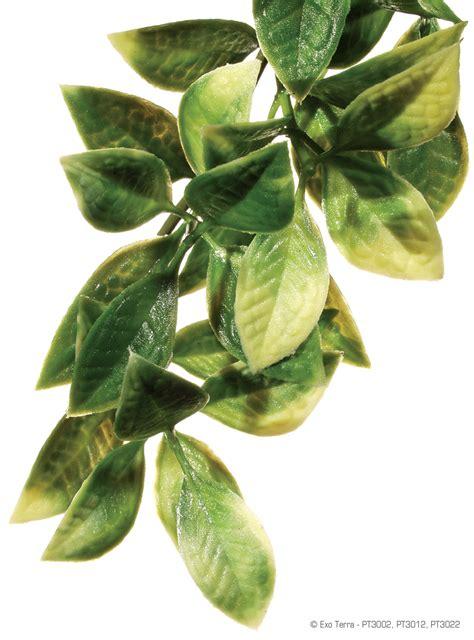 small hanging plants exo terra hanging plant mandarin small tim s reptiles