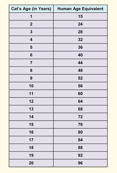 cat age chart versus human age in years critter cuteness pinterest chart cat and animal