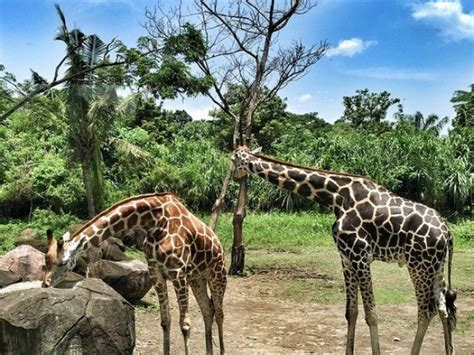 bali safari and marine park bali activity children in bali things to do with the