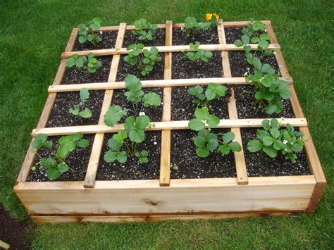 how to plant strawberries in a raised bed young urban farmers raised bed gardens young urban farmers