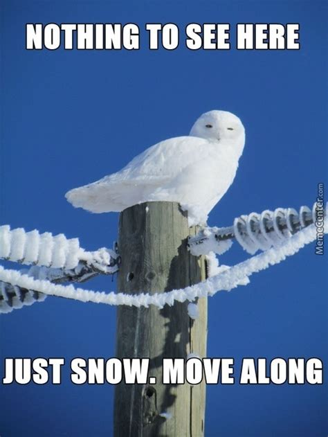 White Owl Meme - owl memes best collection of funny owl pictures