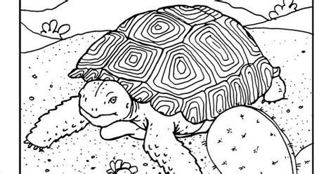 desert tortoise coloring page  gilabencom arizona
