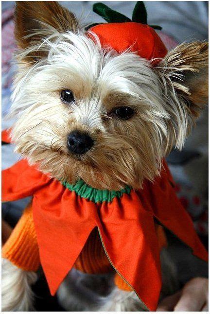 diydoghalloweencostumes halloween fancy dress
