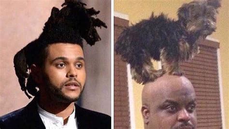 The Weeknd Hair Meme - premios oscar se burlan de the weeknd por su cabello