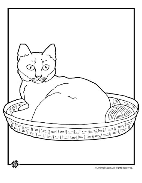 pet cat coloring page woo jr kids activities