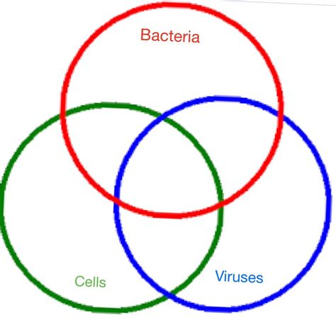 venn diagram of virus and bacteria diagram of bacteria and viruses images how to guide and