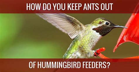 keeping bees out of hummingbird feeders 16 images