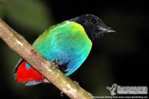 Papua New Guinea Calendrier 2018 Papua New Guinea Birds Of Paradise Tour 18 Days Aug 2017