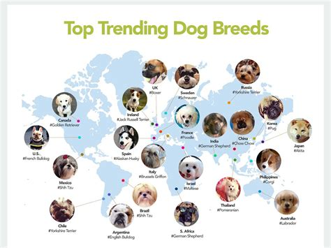 dogs types most popular breeds by country business insider