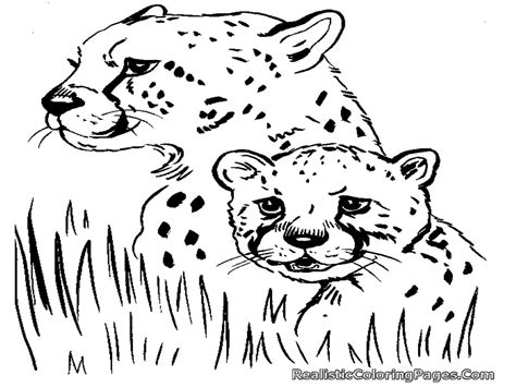 Free Coloring Pages Of Cheetah Realistic Coloring Pages Cheetah Coloring Page