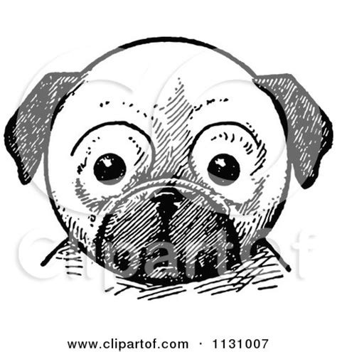 pug black and white drawing clipart of a retro vintage black and white pug royalty free vector