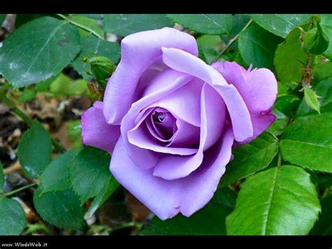 rosa möbel fantasia e realta gt anniversario