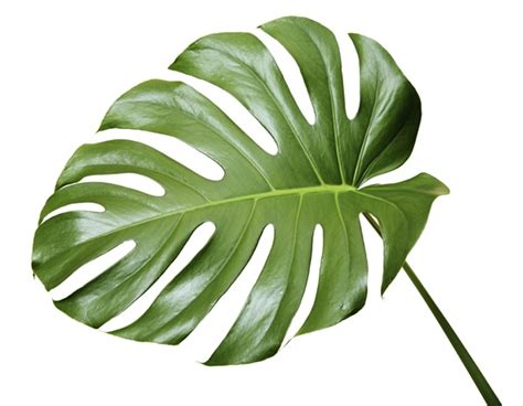 Unique House Names by Monstera Leaf Tropical Foliage Exotic Blooms And