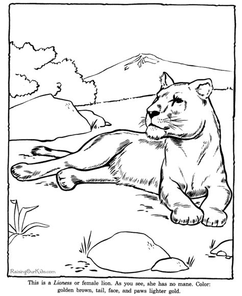 printable zoo animal pictures free zoo animal coloring pages