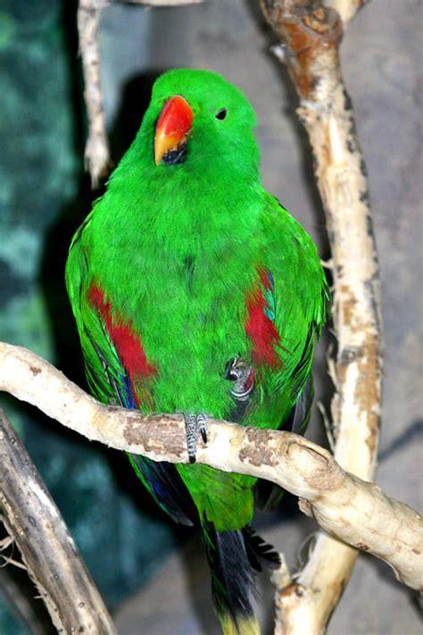 www zoo section com hogle zoo photo 36
