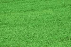 best grass seed for hard to grow lawn areas
