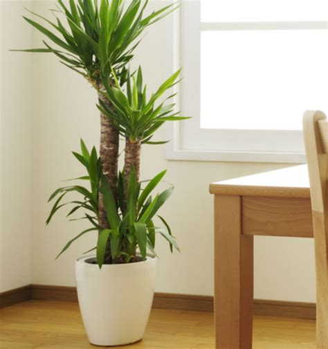 indoor plan indoor plants