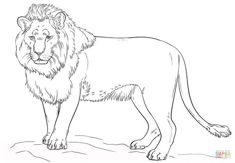 lion standing up coloring sheet coloring pages