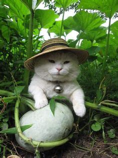 Cat Garden by 1000 Images About Gardening Pets On Pets