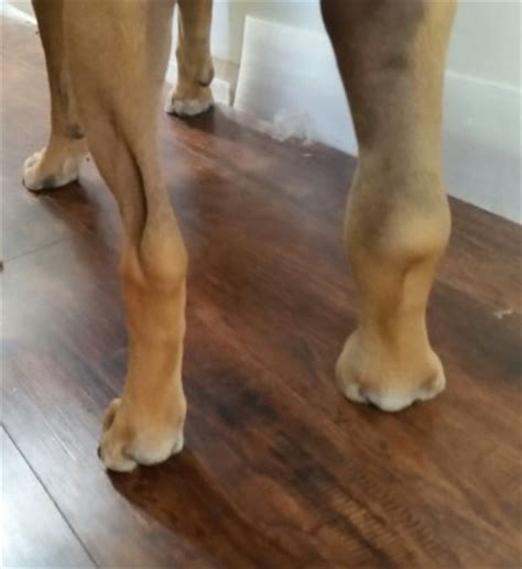 dogs leg swollen what is going on with my dogs leg sad update op page 2 babycenter