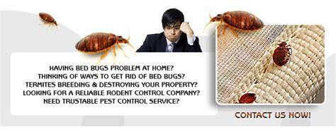 bed bug attorney bed bug lawyer 28 images bed bug attorneys bed bug