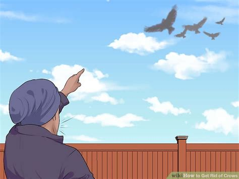 getting rid of crows in backyard how to get rid of crows 15 steps with pictures wikihow