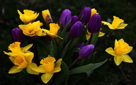 Home Decoration Flowers Yellow And Violet Flowers Hd Wallpapers