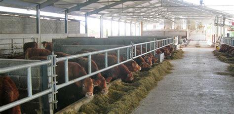 razione alimentare bovini taureaux