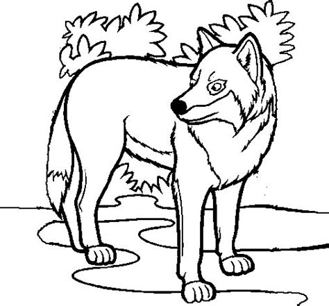 imagenes para dibujar un lobo dibujo de lobo para colorear dibujos net