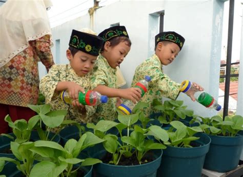 membuat tanaman hidroponik sawi cara budidaya sawi di pot atau polybag