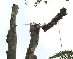 Felling A Tree In Sections by Tree Surgery Lmt Services