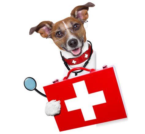 emergency puppy northway animal emergency clinic 24 7 365 emergency animal care