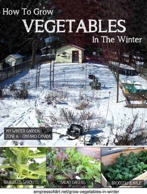 growing a winter garden how to grow vegetables in the winter empress of dirt