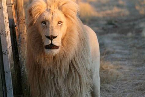 Of Ta Mba Reviews by Zanchieta Cat Farm Bloemfontein South Africa